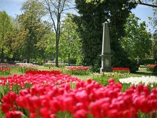 Fête de la Tulipe, Parc de l'Indépendance Morges © Sacha Fehlmann