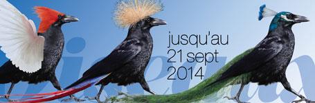"""""""Nos oiseaux"""" exhibition © 2013 Muséum d'histoire naturelle, Genève"""