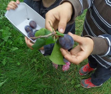 Mummy, fruit it's much tastier if I pick it myself © genevafamilydiaries.net