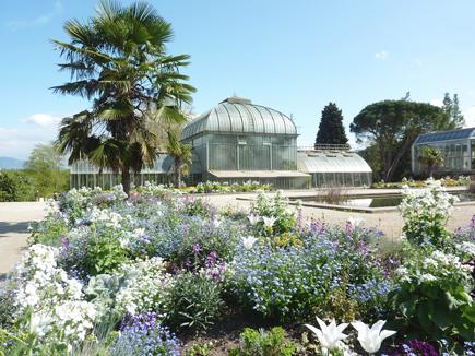 © 2013 Conservatoire et Jardin botaniques, Ville de Genève.