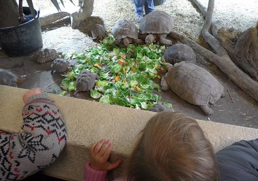 It's turtle feeding time! photo © genevafamilydiaries.net