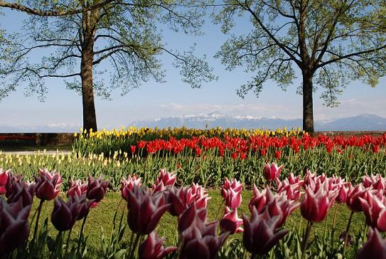 Fête de la Tulipe, Morges (VD) - photo © Vanessa Hermann
