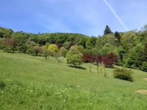 Arboretum National du Vallon de l'Aubonne. Photo © genevafamilydiaries.net