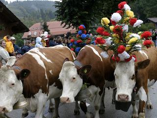 Copyright : office du Tourisme de St-Cergue. 2003 troupeau de la famille Bory