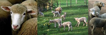 © 2016 Syndicat d'élevage du menu bétail de Genève